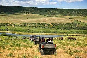 Lucky 8 Ranch - Bison ATV Adventure Tour