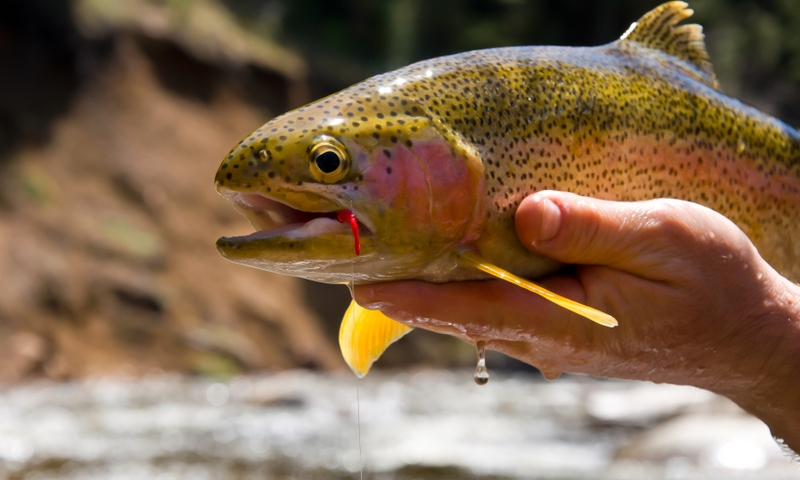Steamboat springs colorado fishing fly fishing alltrips for Fishing lakes in colorado springs