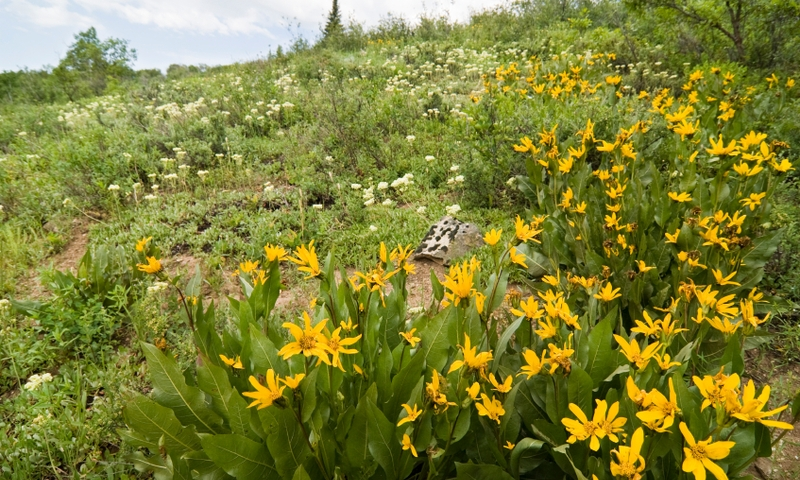 Steamboat Springs Attractions Routt National Forest
