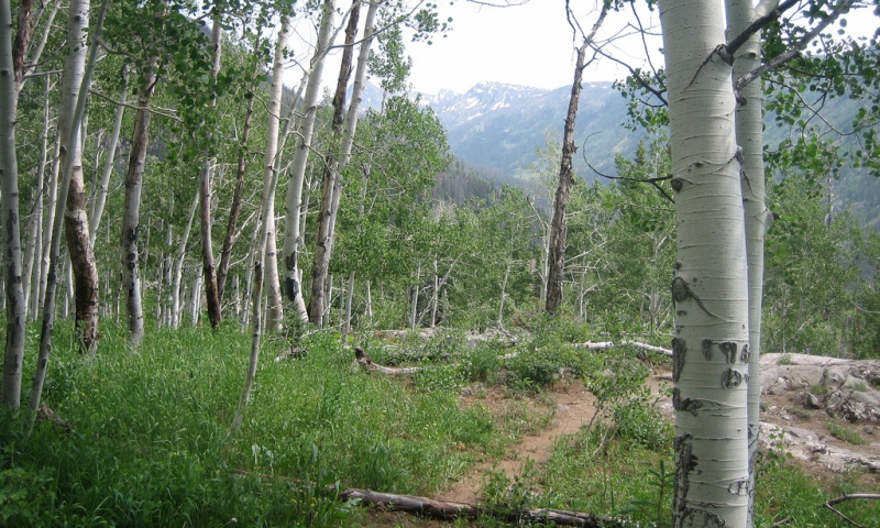 Mount Zirkel Wilderness CO