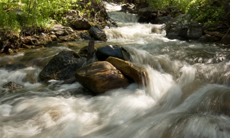 Rushing Stream in Routt National Forest