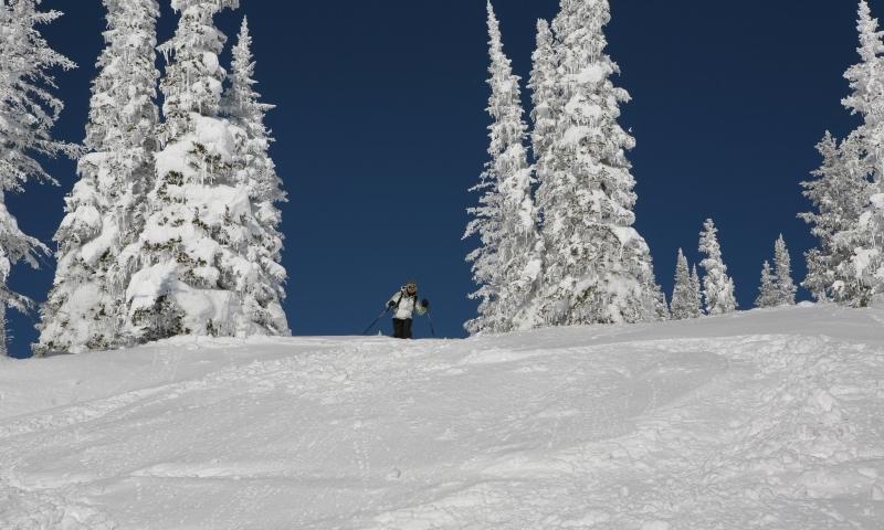 Steamboat Springs Tree Skiing Alltrips
