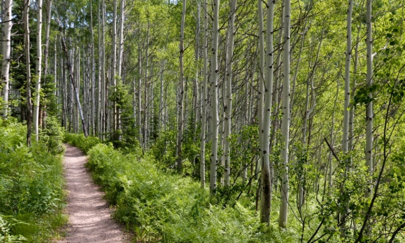 Hiking Trail in Steamboat Springs