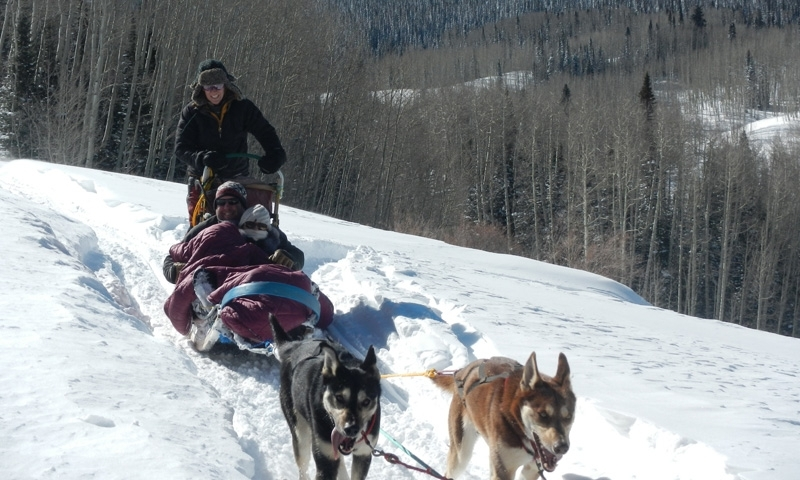 Steamboat Springs Dog Sledding